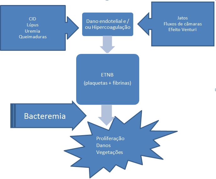 secuencia de endocarditis