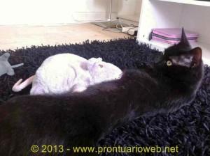 gatos toxoplama - prontuarioweb