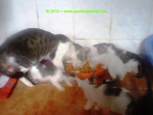 gatos toxoplama site prontuarioweb