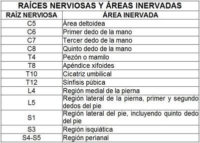 RAICES NERVIOSAS Y AREA NERVADA