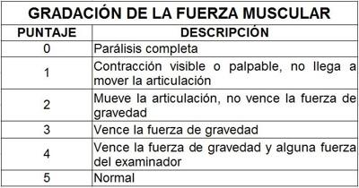graduación de la fuerza muscular TVM - Prontuarioweb